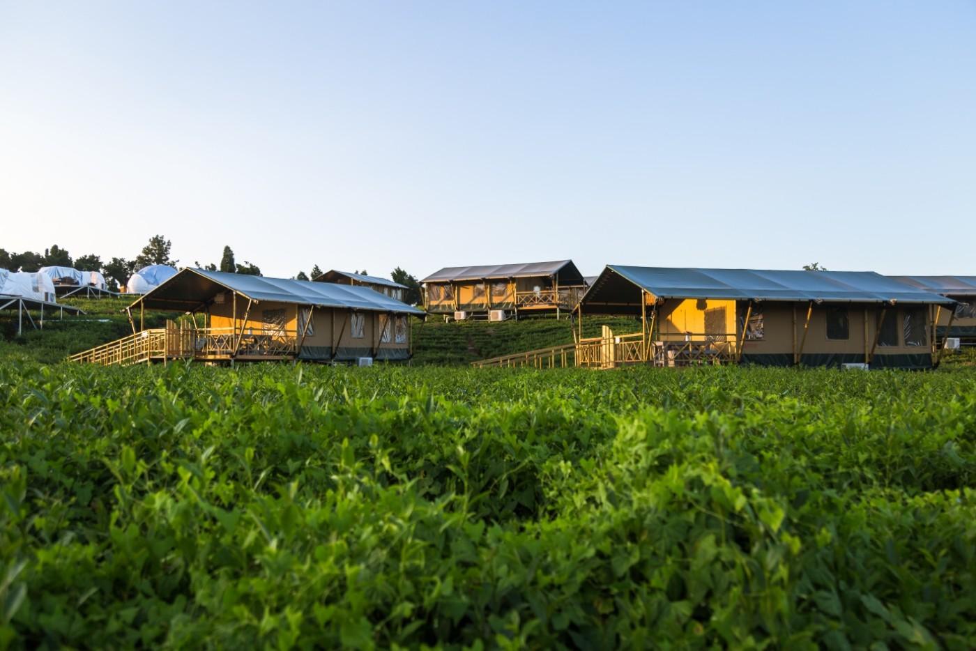 喜马拉雅野奢帐篷酒店—江苏常州茅山宝盛园茶园帐篷酒店14