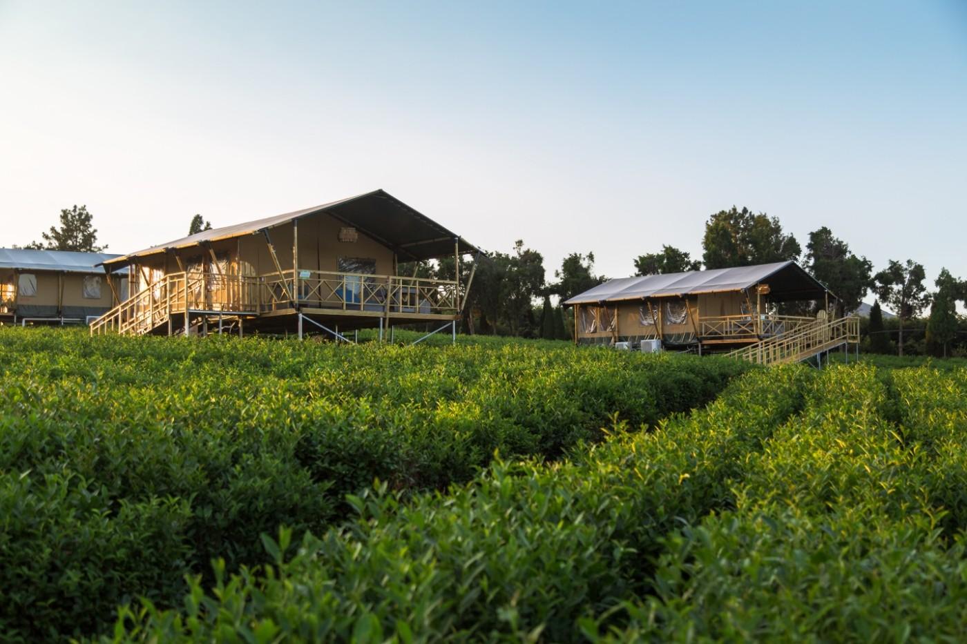 喜马拉雅野奢帐篷酒店—江苏常州茅山宝盛园茶园帐篷酒店19