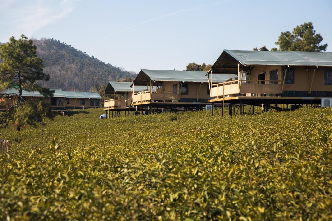 喜马拉雅野奢帐篷酒店—江苏常州茅山宝盛园2期茶田帐篷酒店9