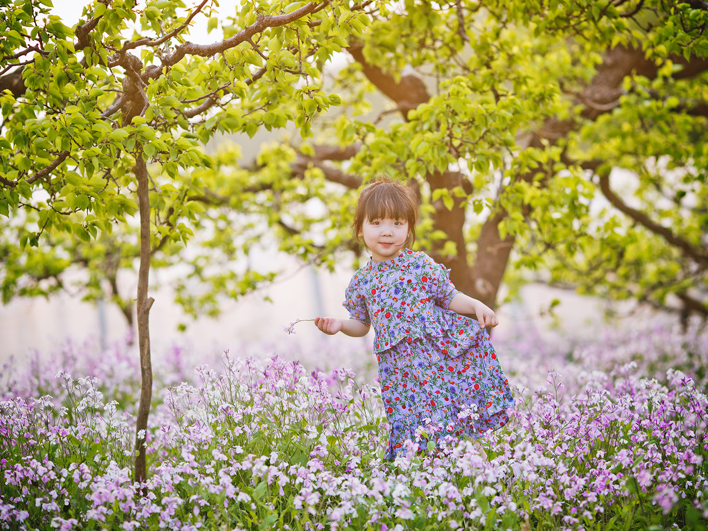 春天在哪里?5