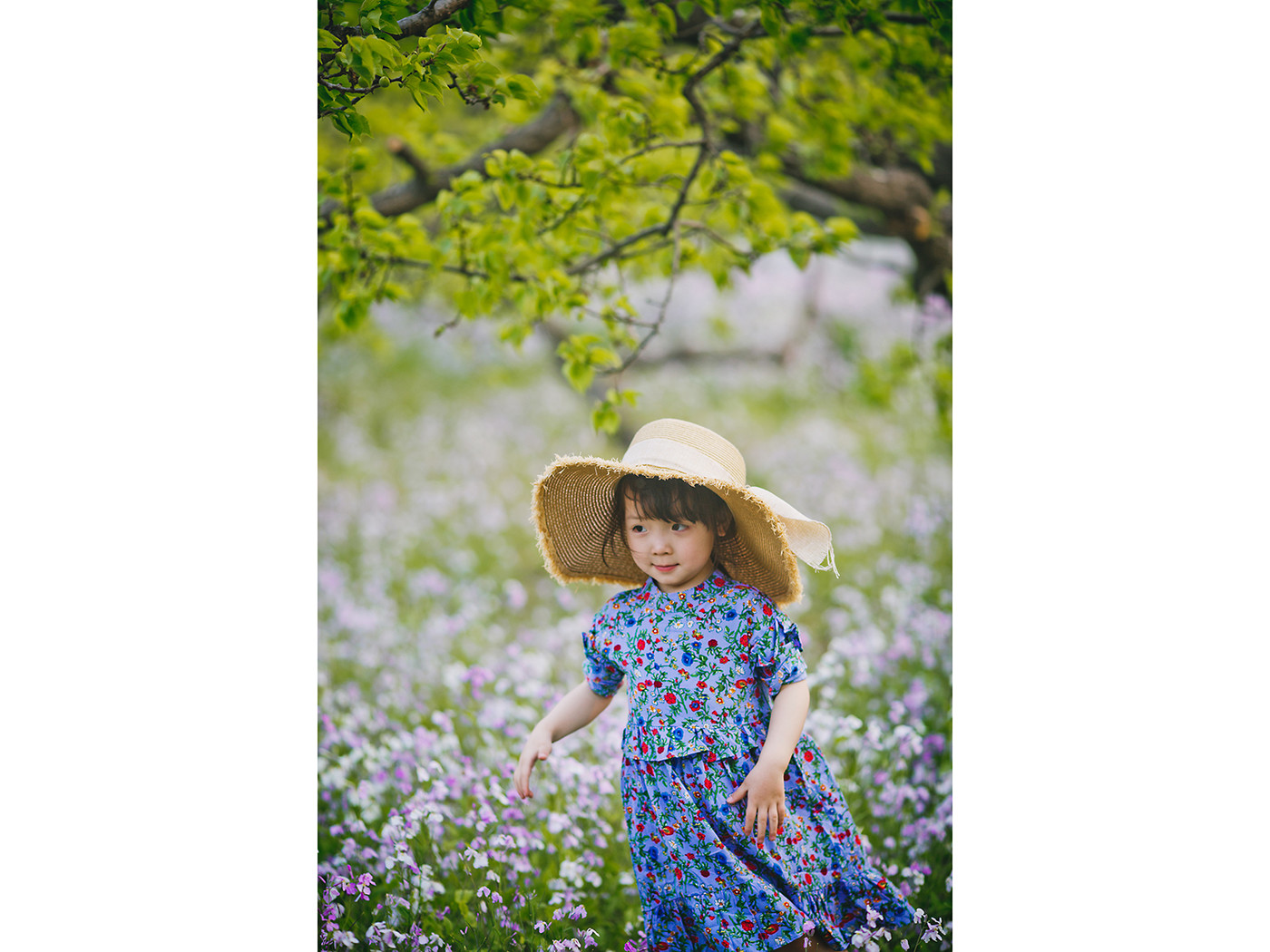春天在哪里?2