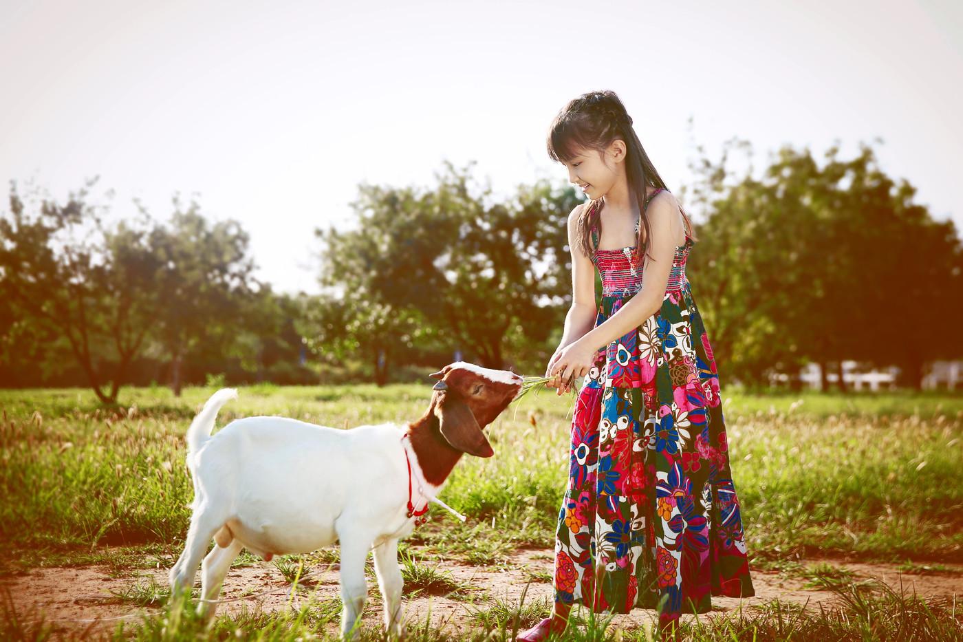 与马儿、羊儿共舞4