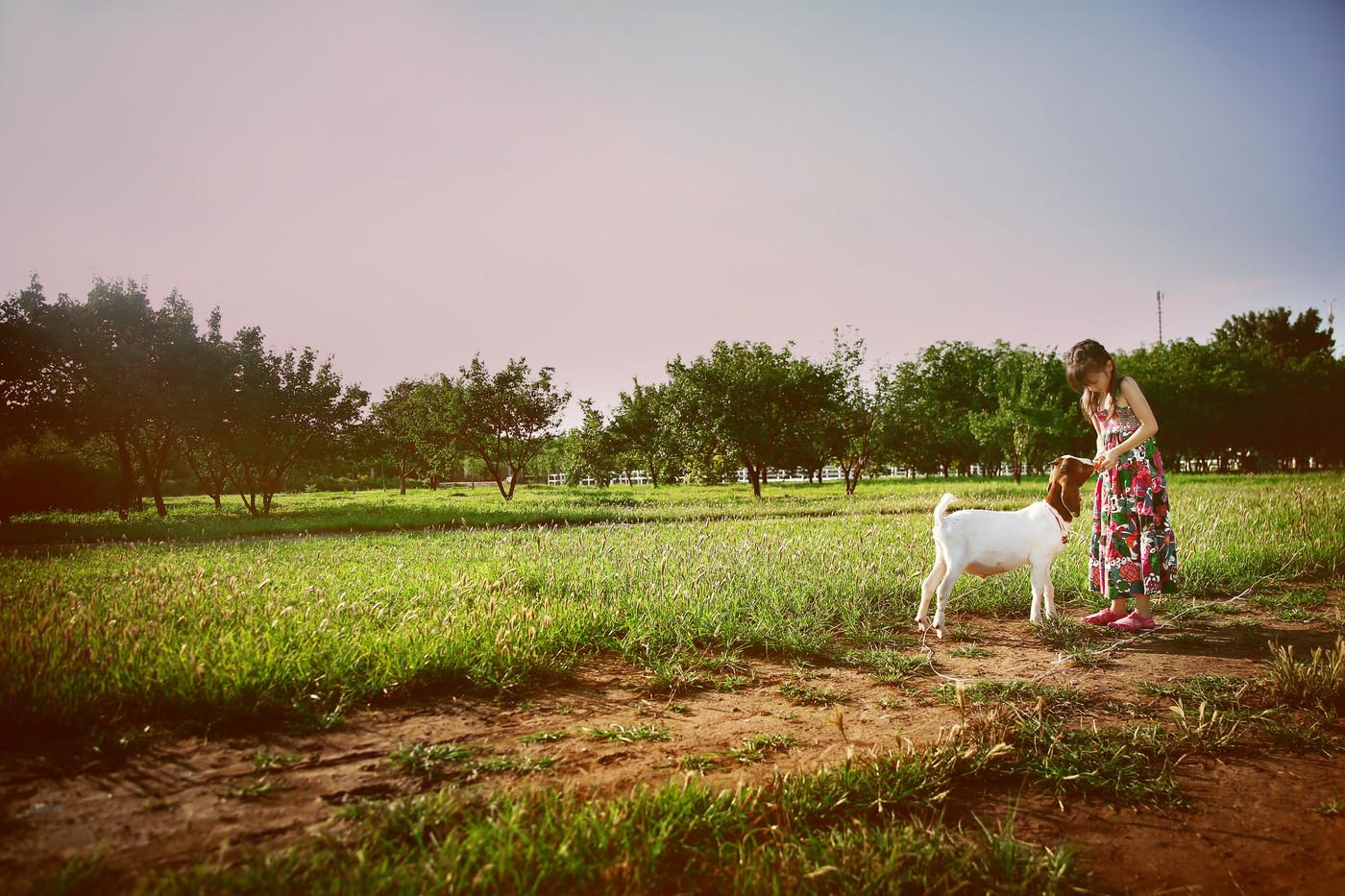 与马儿、羊儿共舞1