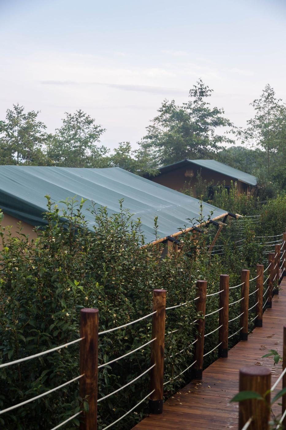 喜马拉雅野奢帐篷酒店—云南腾冲高黎贡山茶博园6