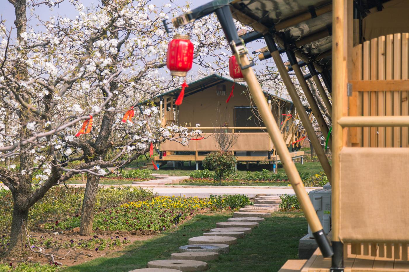 喜马拉雅野奢帐篷酒店—安徽砀山东篱蓬芦(梨园78平)19