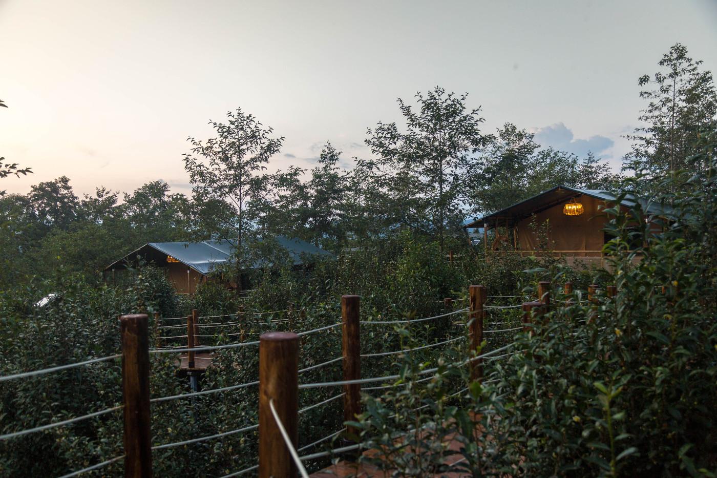 喜马拉雅野奢帐篷酒店—云南腾冲高黎贡山茶博园23