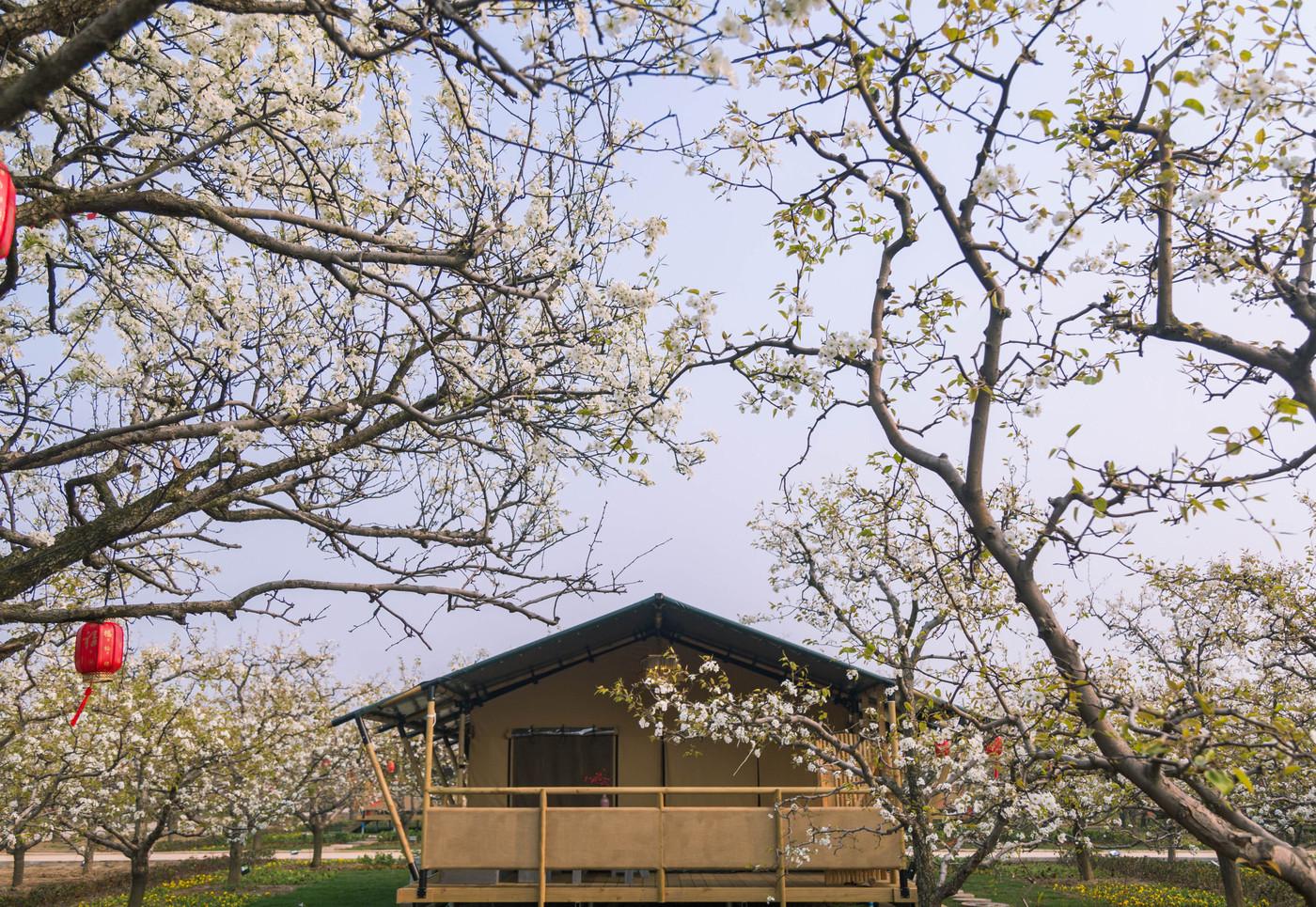 喜马拉雅野奢帐篷酒店—安徽砀山东篱蓬芦(梨园62平)1