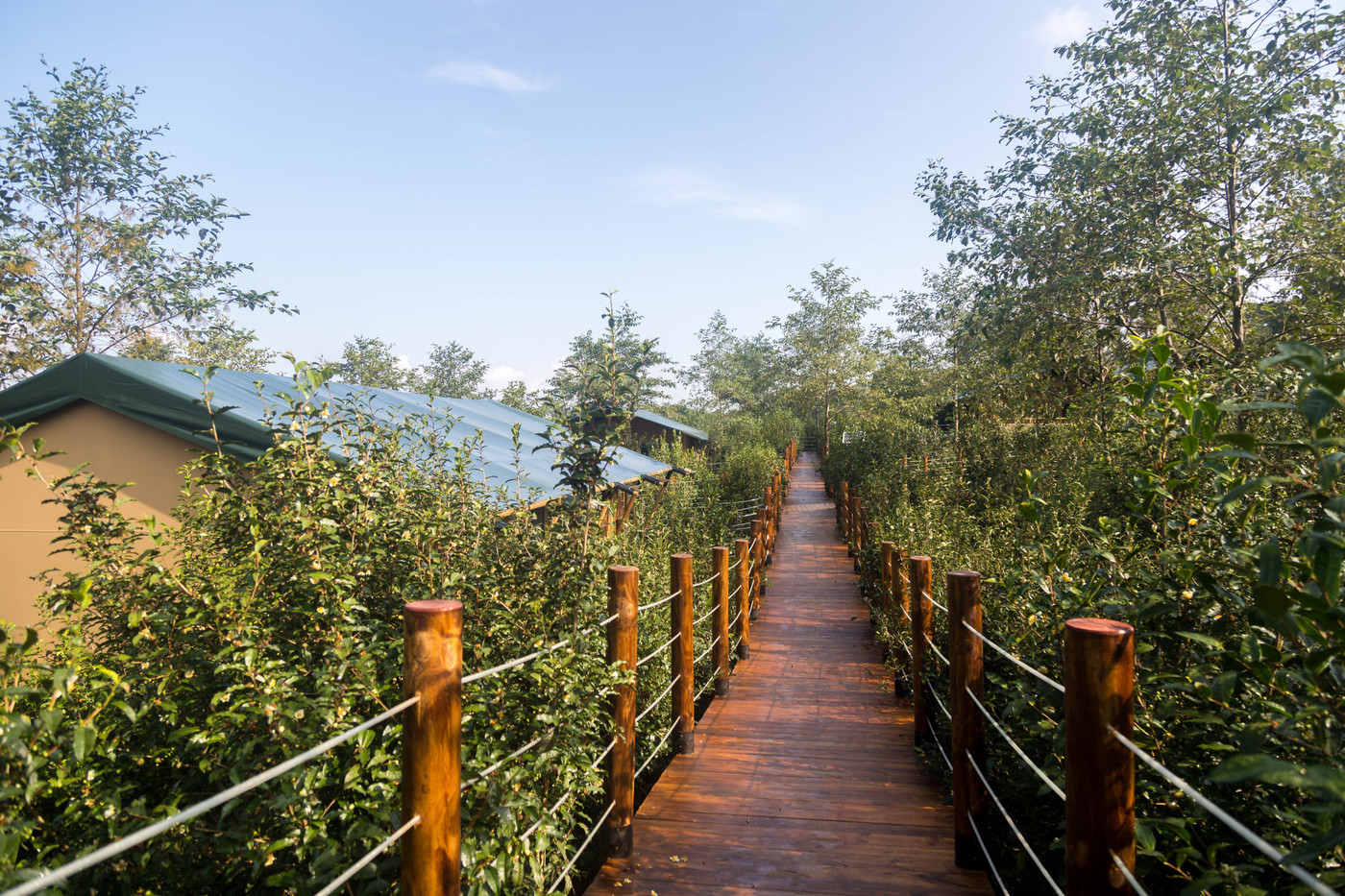 喜马拉雅野奢帐篷酒店—云南腾冲高黎贡山茶博园10