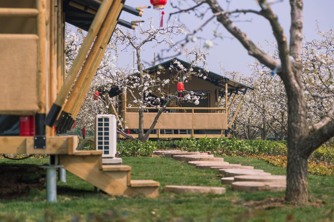 喜马拉雅野奢帐篷酒店—安徽砀山东篱蓬芦(梨园78平)9