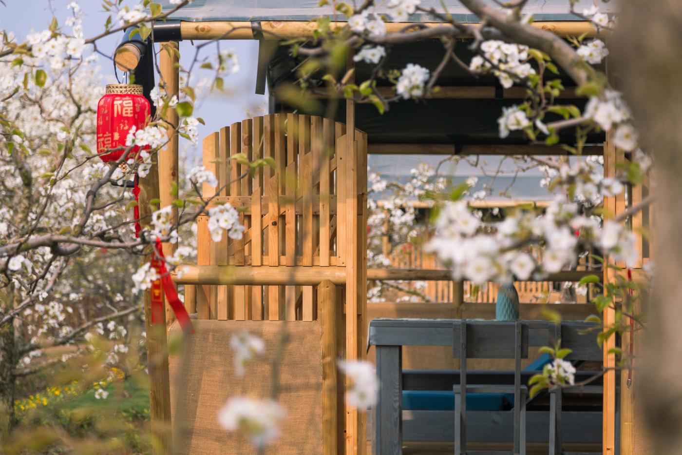 喜马拉雅野奢帐篷酒店—安徽砀山东篱蓬芦(梨园78平)7