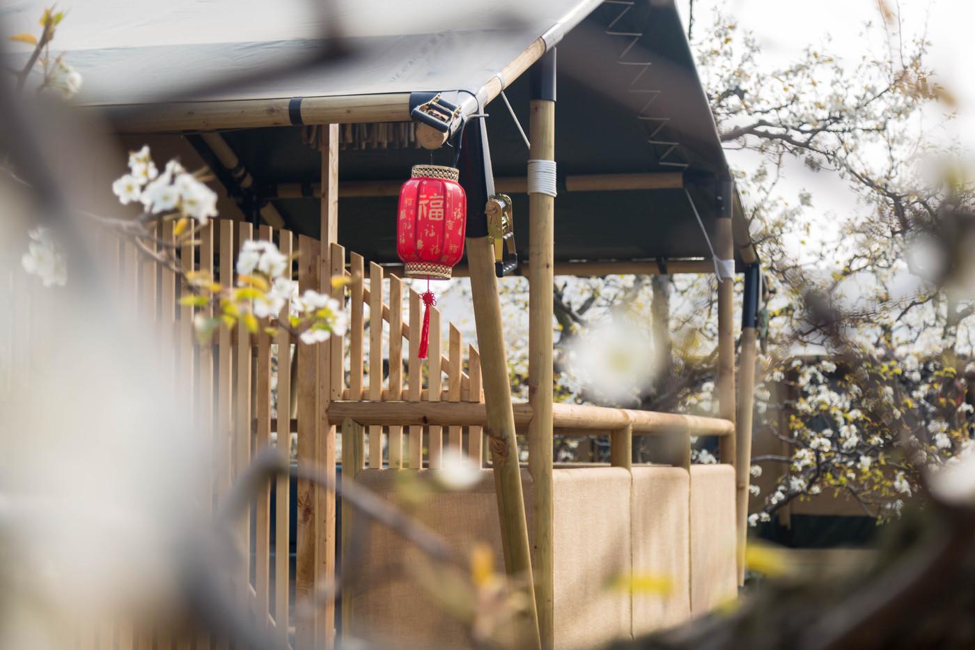 喜马拉雅野奢帐篷酒店—安徽砀山东篱蓬芦梨园帐篷酒店12