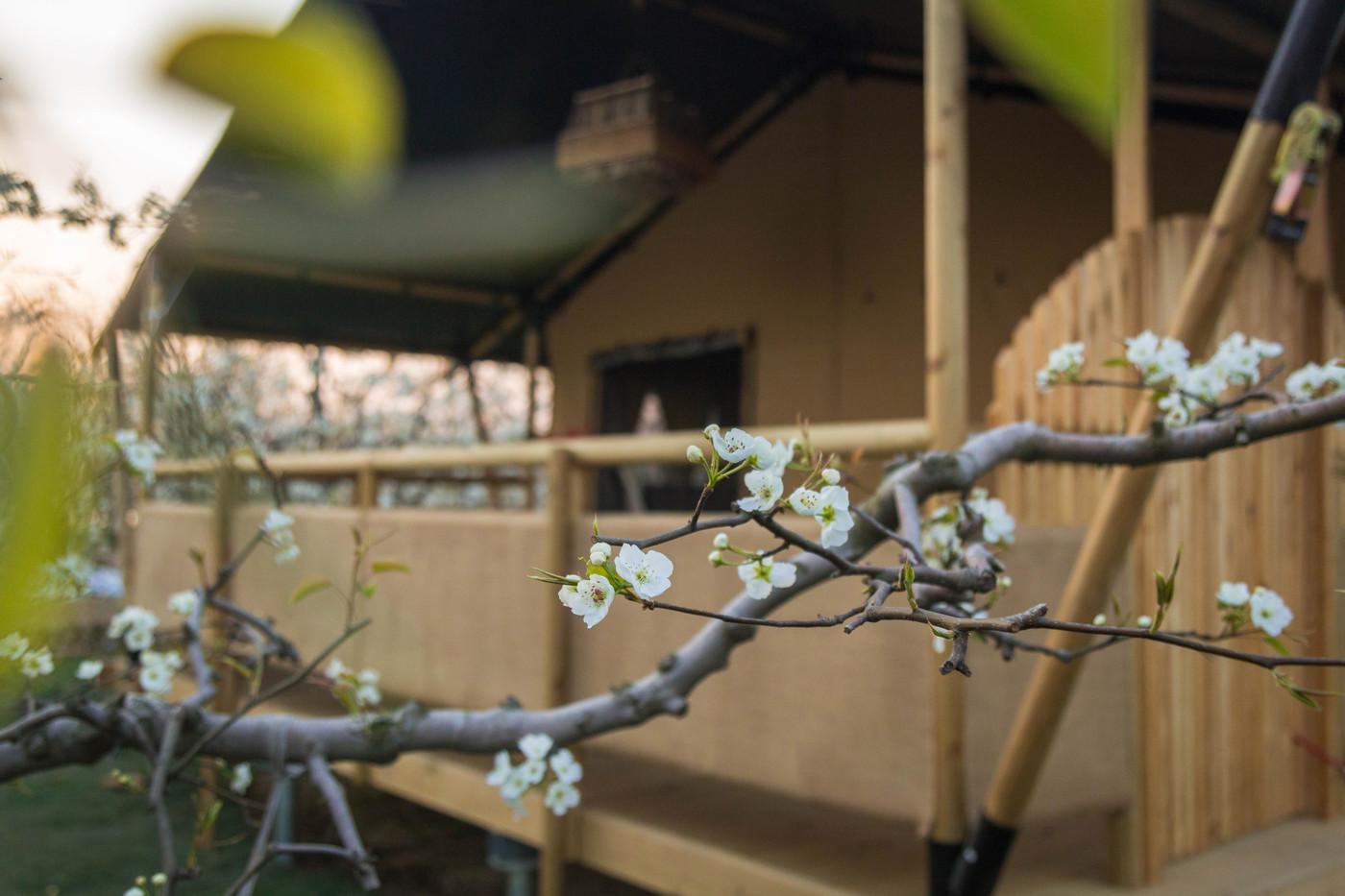 喜马拉雅野奢帐篷酒店—安徽砀山 东篱蓬芦(梨园41平)20