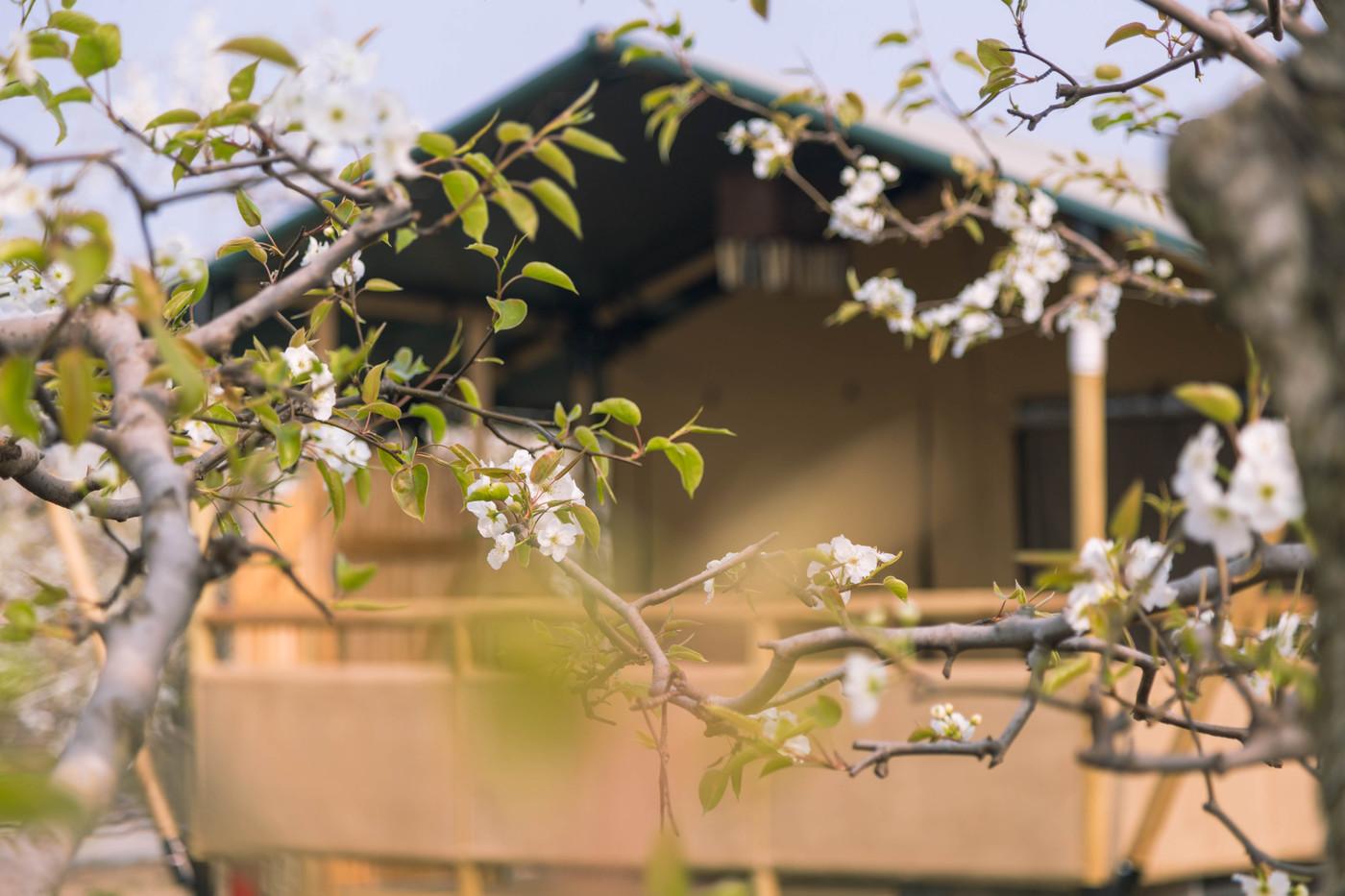 喜马拉雅野奢帐篷酒店—安徽砀山 东篱蓬芦(梨园41平)14