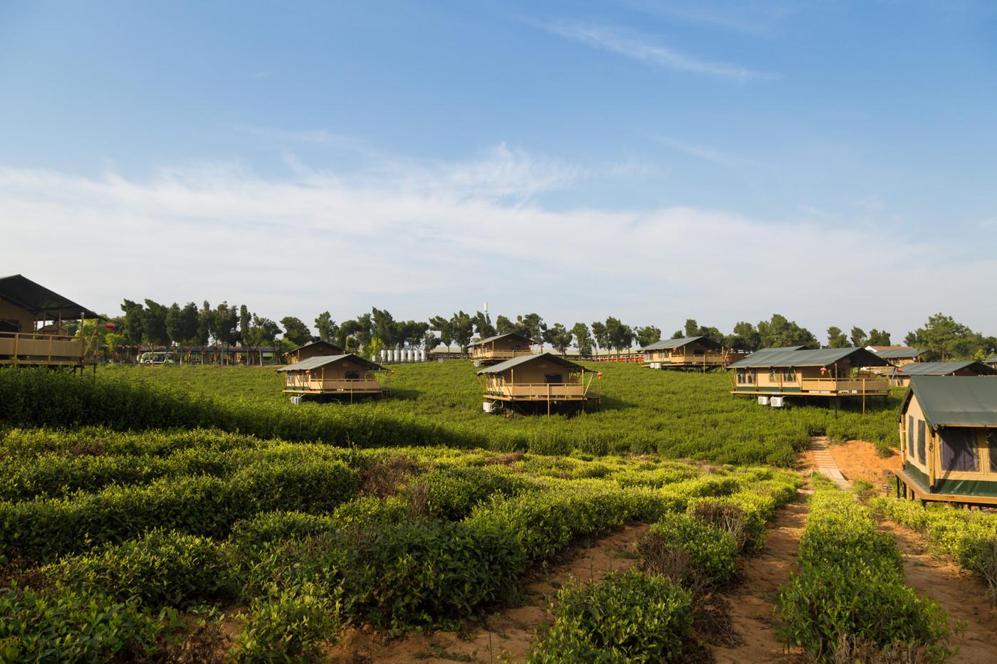 喜马拉雅野奢帐篷酒店—江苏常州茅山宝盛园2期茶田帐篷酒店1