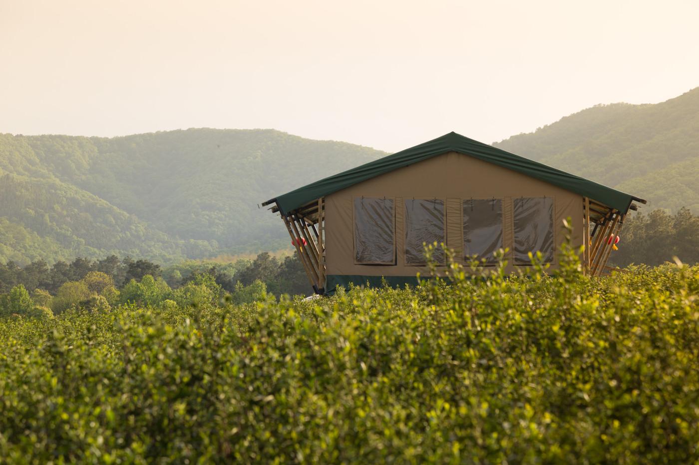 喜马拉雅野奢帐篷酒店—江苏常州茅山宝盛园2期茶田帐篷酒店14
