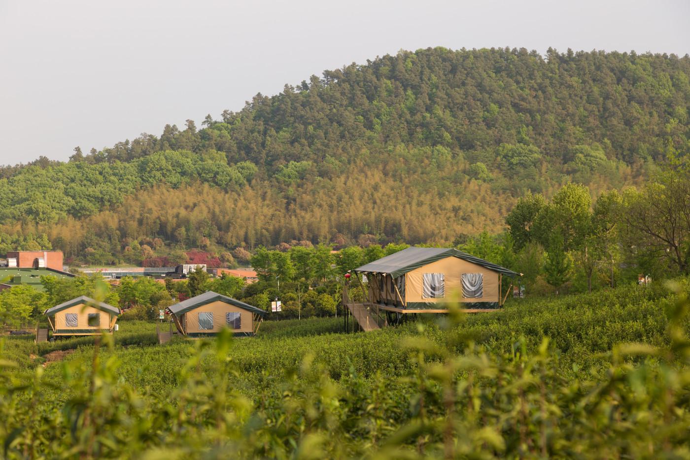 喜马拉雅野奢帐篷酒店—江苏常州茅山宝盛园2期茶田帐篷酒店8