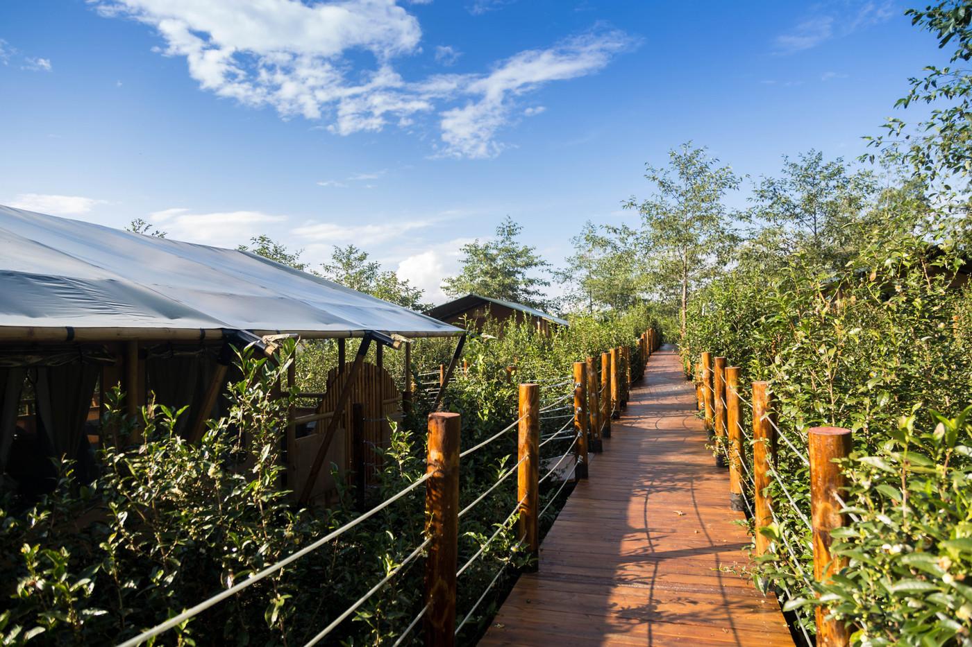 喜马拉雅野奢帐篷酒店—云南腾冲高黎贡山茶博园12