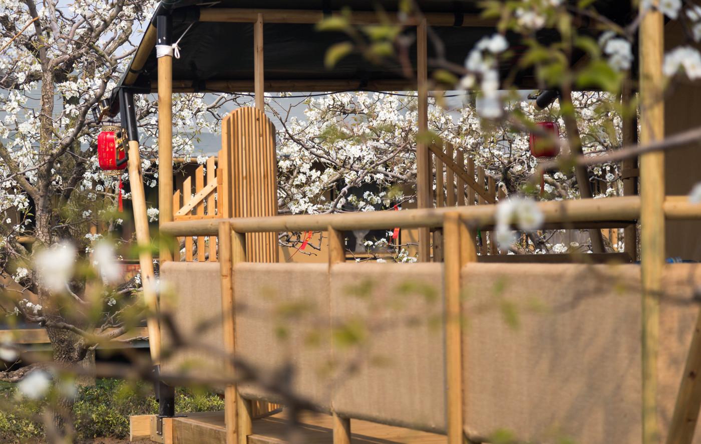 喜马拉雅野奢帐篷酒店—安徽砀山 东篱蓬芦(梨园41平)9