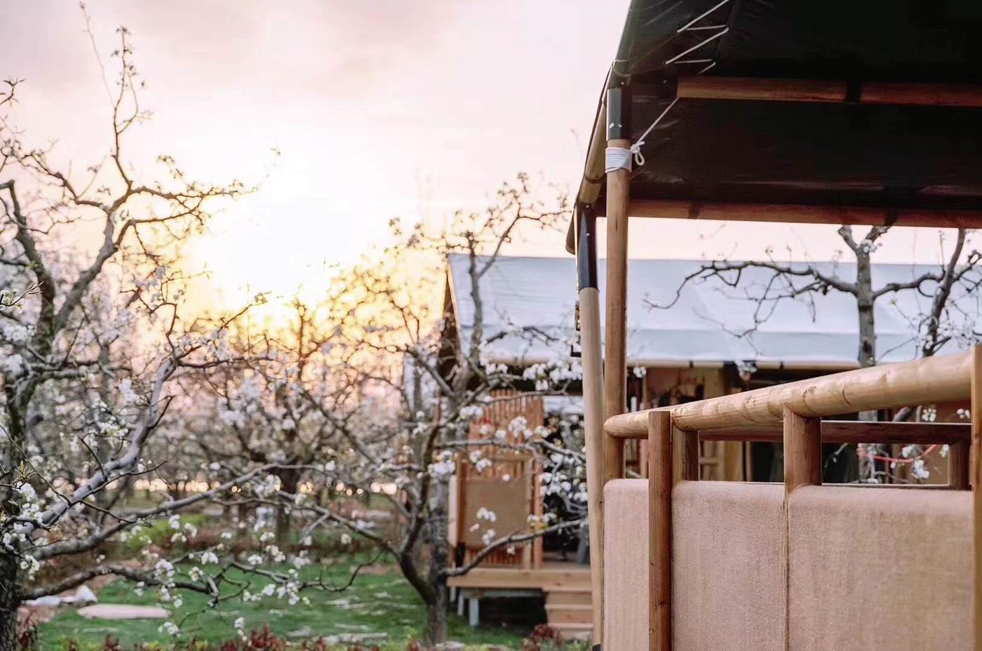 喜马拉雅野奢帐篷酒店—安徽砀山东篱蓬芦梨园帐篷酒店1